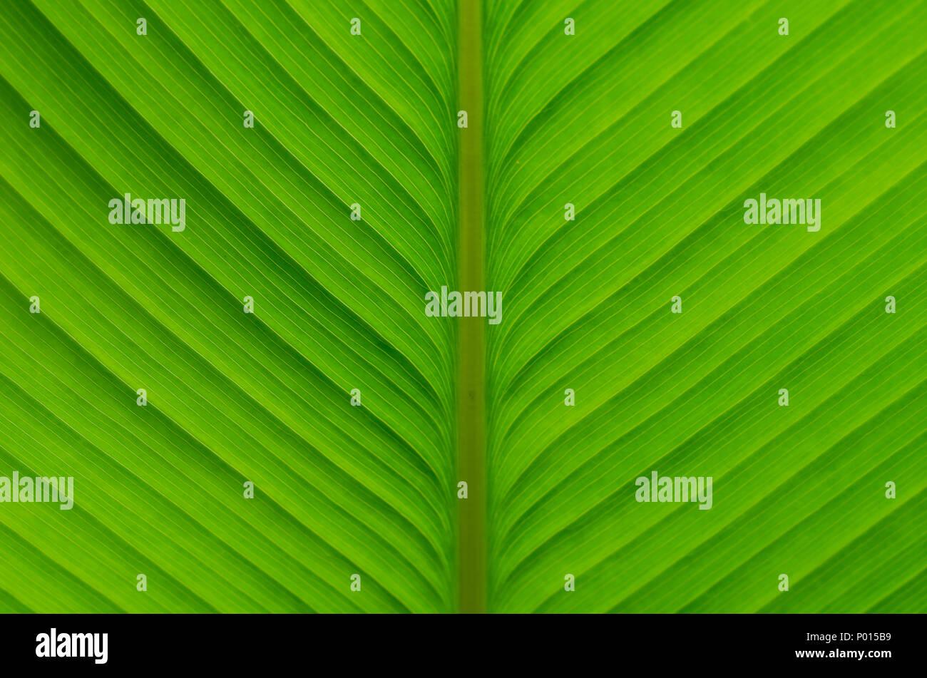 Patrón de hojas verdes Foto de stock