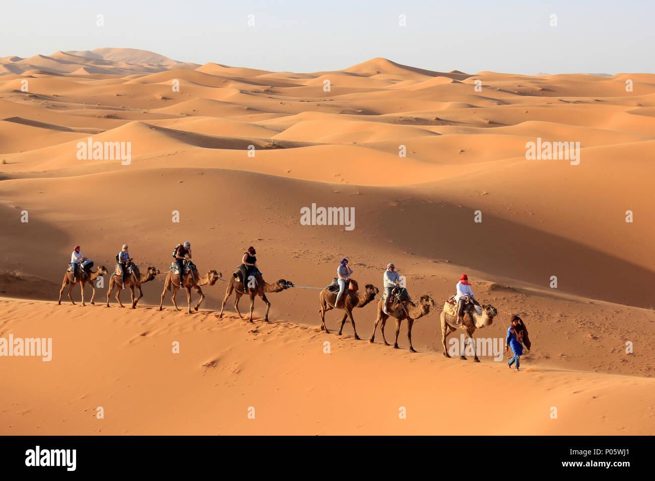 Los turistas disfrutando de Erg Chebbi : Caminata en camello, dunas de Merzouga, Marruecos Imagen De Stock