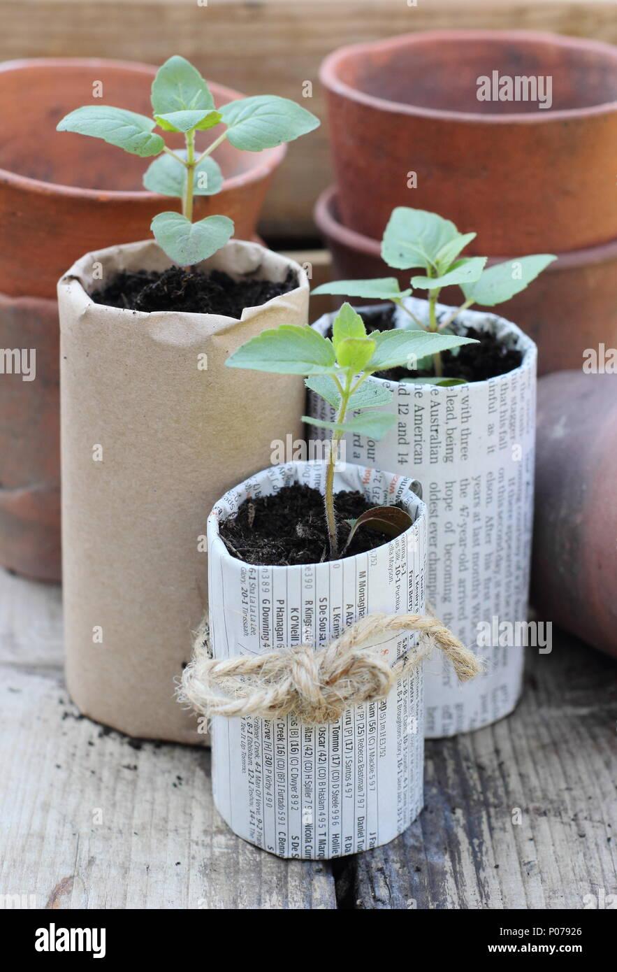 Jardinería libre de plástico. Antiguas ollas de arcilla, madera y bandejas de semillas de papel casero ollas de plantas utilizadas para reducir el uso de plástico en el jardín, Inglaterra, Reino Unido Foto de stock