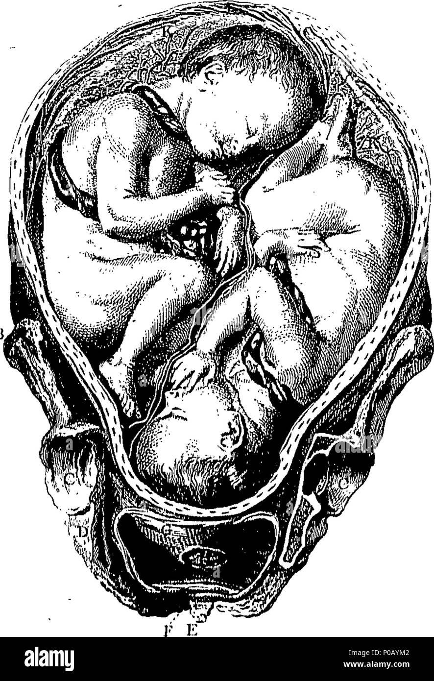 Contemporáneo Anatomía Y Fisiología Términos Médicos Bandera ...
