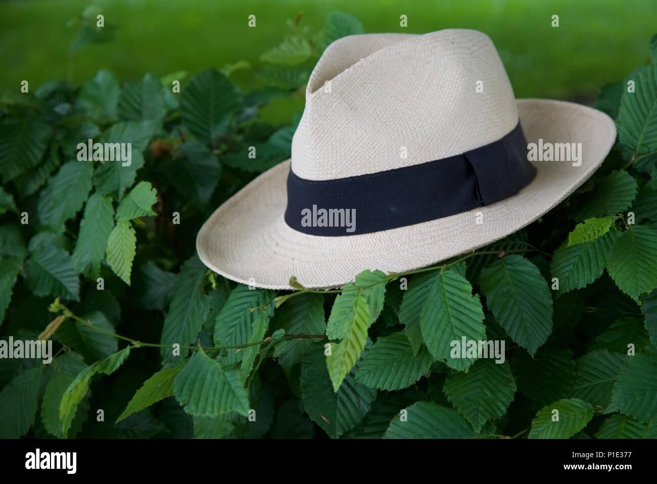 2598f0e904c5a Sombrero  un sombrero de Panamá baratos descansando sobre un seto de hayas  Imagen De Stock