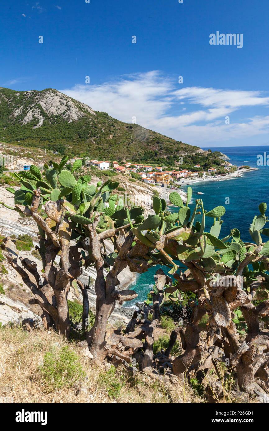Las tunas en las rocas sobre el mar, Pomonte, Marciana, La Isla de Elba, provincia de Livorno, Toscana, Italia Imagen De Stock