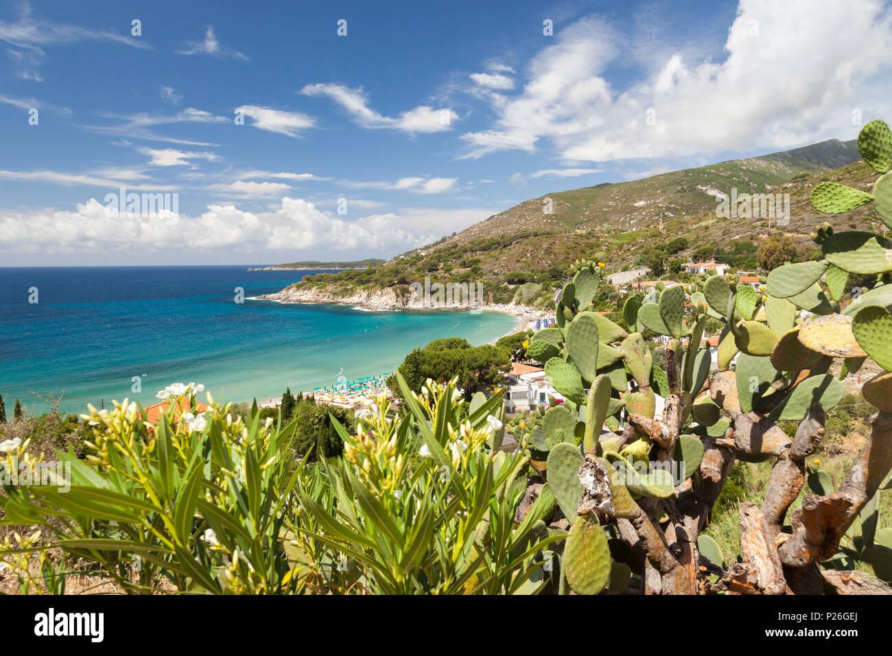 Las tunas en las rocas sobre el mar, Playa Cavoli, Marciana, La Isla de Elba, provincia de Livorno, Toscana, Italia Imagen De Stock