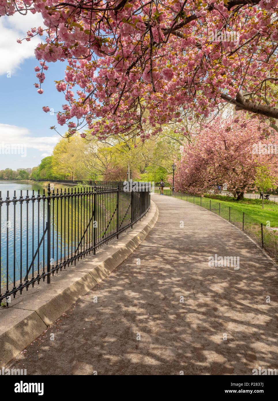 Único Colorear La Flor Del Estado De Nueva York Fotos - Dibujos Para ...