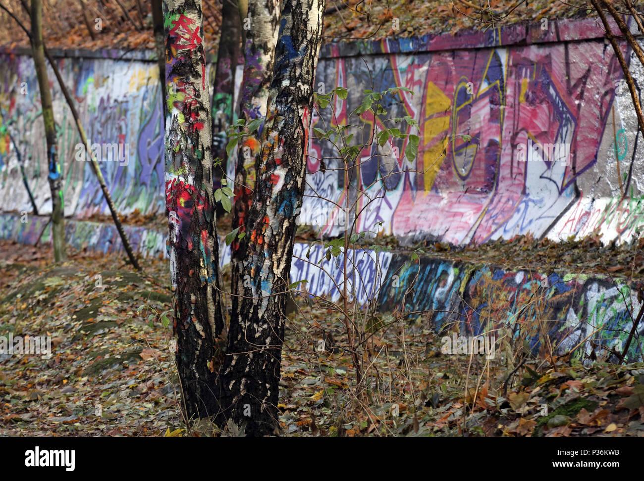 Berlín, Alemania, pintado de colores vivos abedules en el Natur-Park Suedgelaende Foto de stock