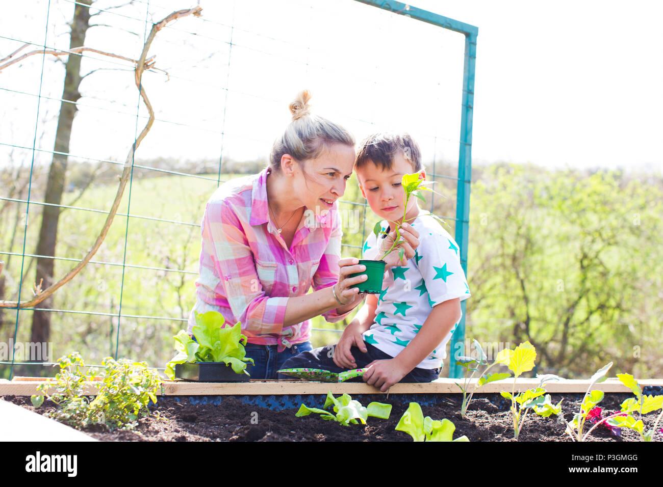 Hermosa madre y su hijo rubia ensalada de siembra en la cama levantada en su jardín Foto de stock