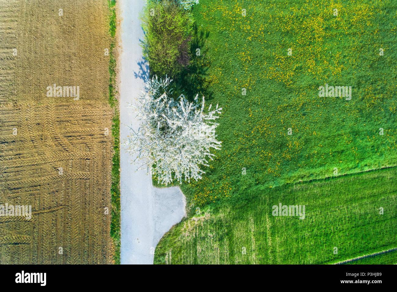 Kirschblüte, Bayern, Deutschland Foto de stock