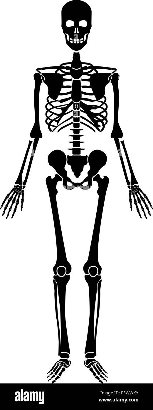 Esqueleto Humano icono ilustración vectorial de color negro estilo ...