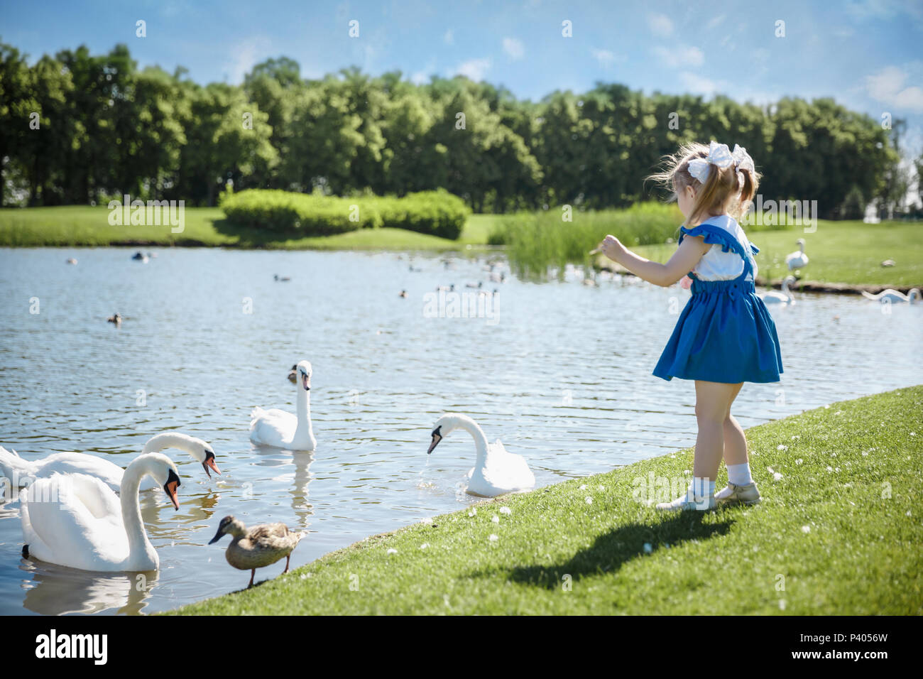 Hijita caminar en el parque cercano y mirando los cisnes. Imagen De Stock