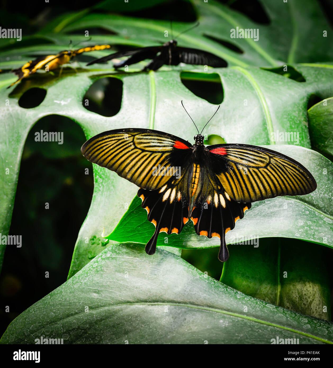 Hermosa Uñas Foto Del Oro Negro Y Ideas - Ideas Para Esmaltes ...