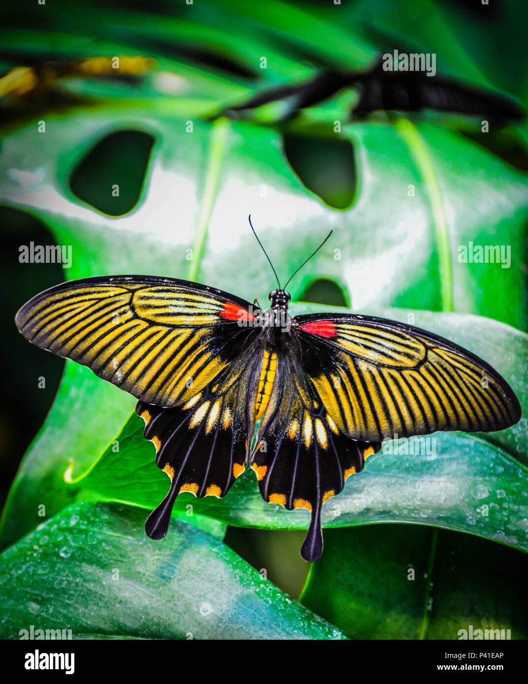 Asombroso Rojo Negro Y Oro Uñas Fotos Galería - Ideas de Pintar de ...