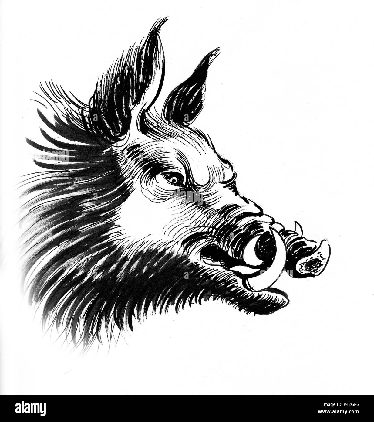 Boar Head Imagenes De Stock Boar Head Fotos De Stock Alamy