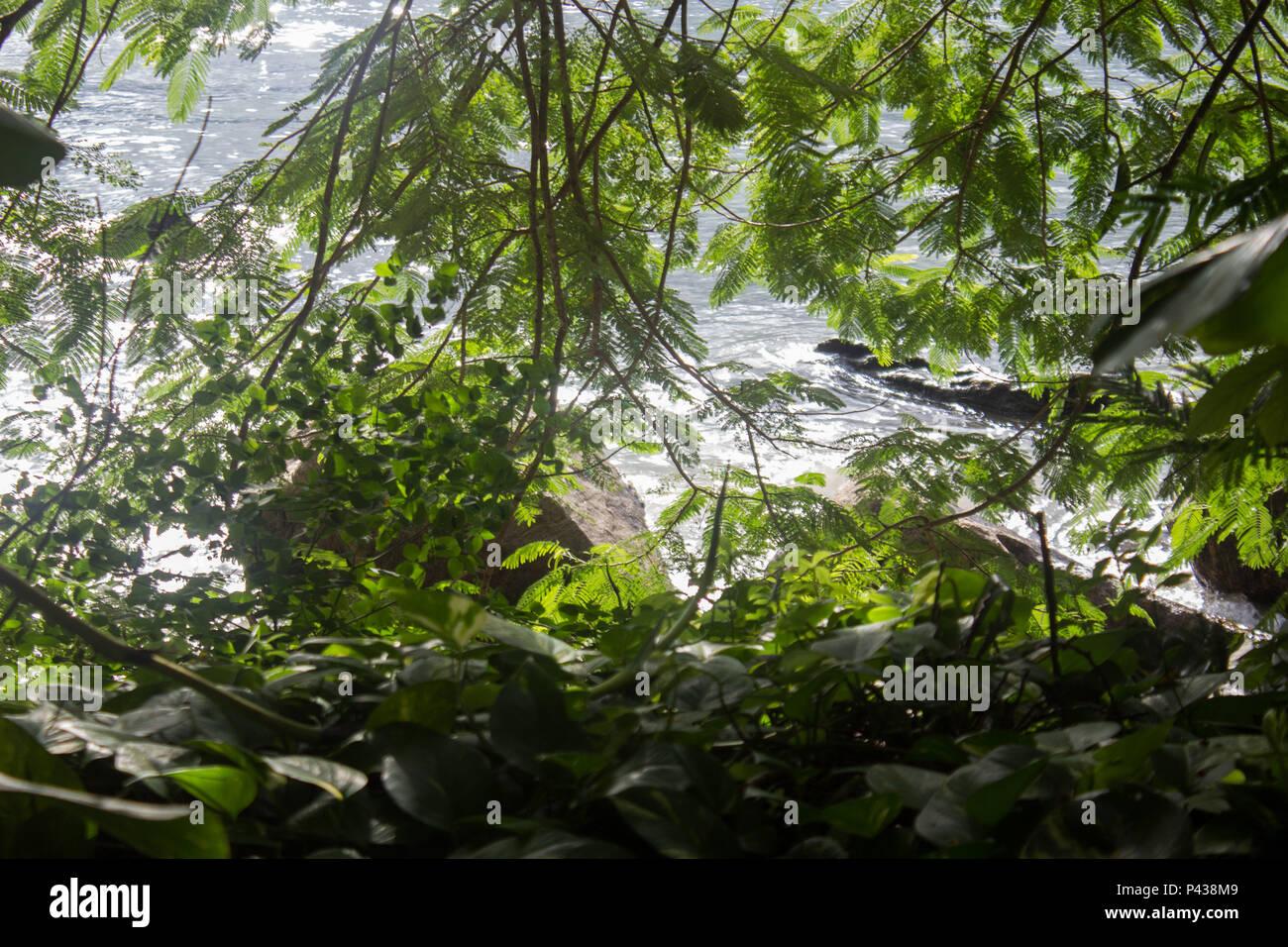 Praia com pedras e rochas atras de vegetação verde em dia ensolarado em Ubatuba, SP, Brasil. Imagen De Stock
