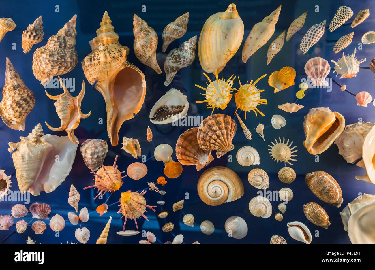Una colección de caracoles en la pantalla. Foto de stock