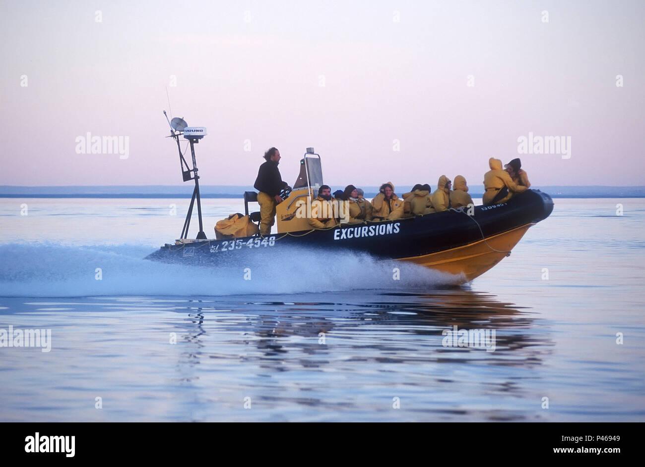 Personas con una aceleración zodiac en un viaje de avistamiento de ballenas en el St Lawrence off Tadoussac, Quebec Imagen De Stock