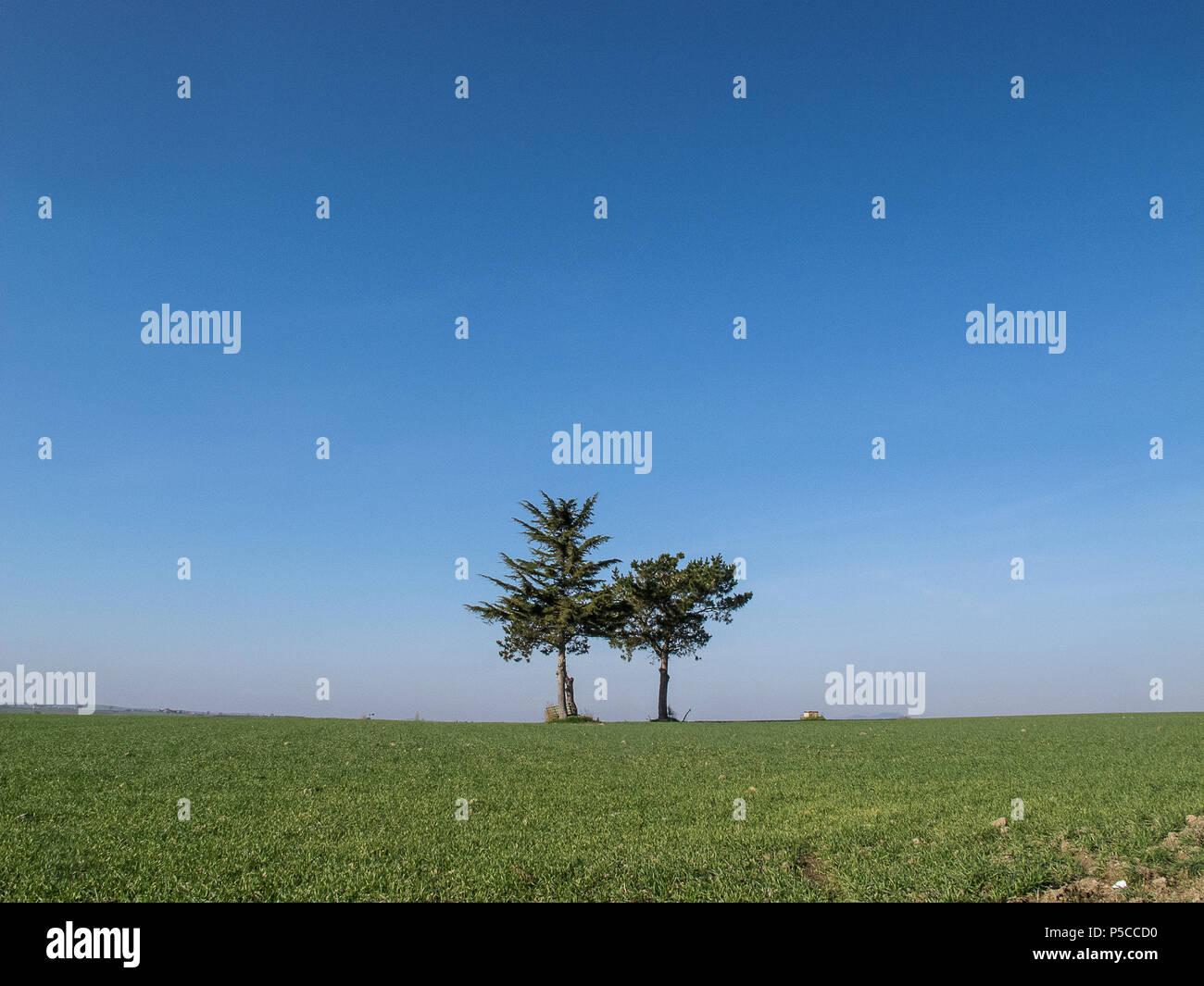 Los árboles solitarios en el campo del Lacio (Italia) Imagen De Stock