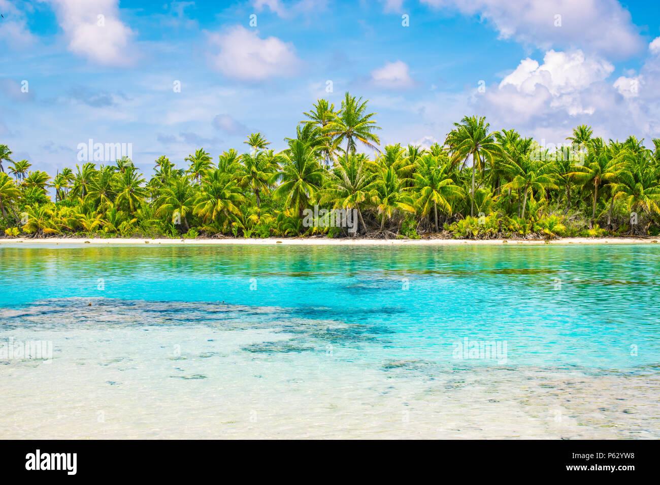 Palmeras tropicales y laguna de Fakarava, Polinesia Francesa. Concepto de vacaciones de verano. Foto de stock