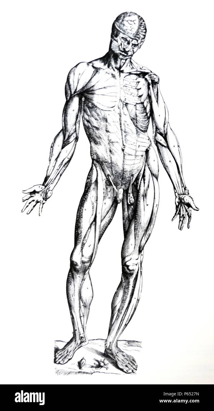 Right Side Of Body Imágenes De Stock & Right Side Of Body Fotos De ...