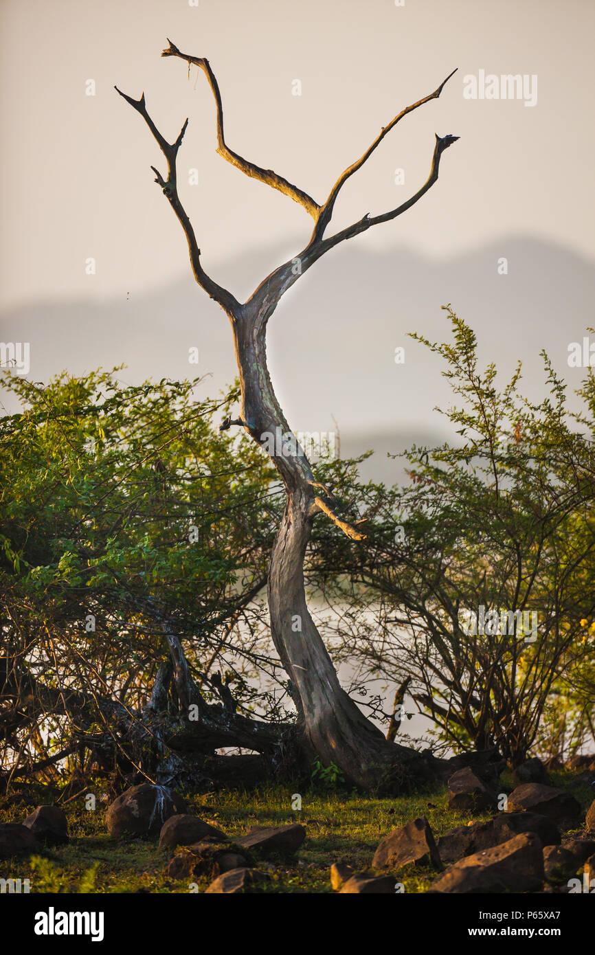 Temprano por la mañana en la orilla del lago de la Cienaga de las macanas de humedales, la provincia de Herrera, República de Panamá. Foto de stock