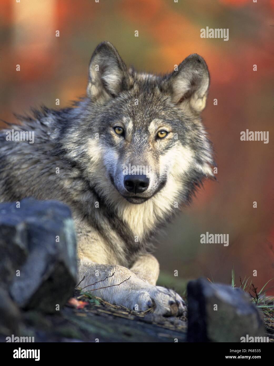 La vida íntima de los animales salvajes Imagen De Stock