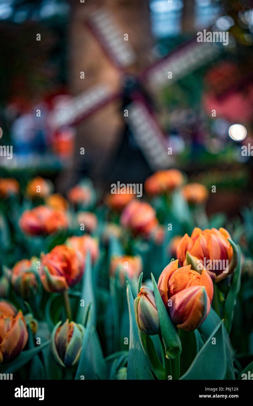 Disparo de fotograma completo de flores Foto & Imagen De Stock ...
