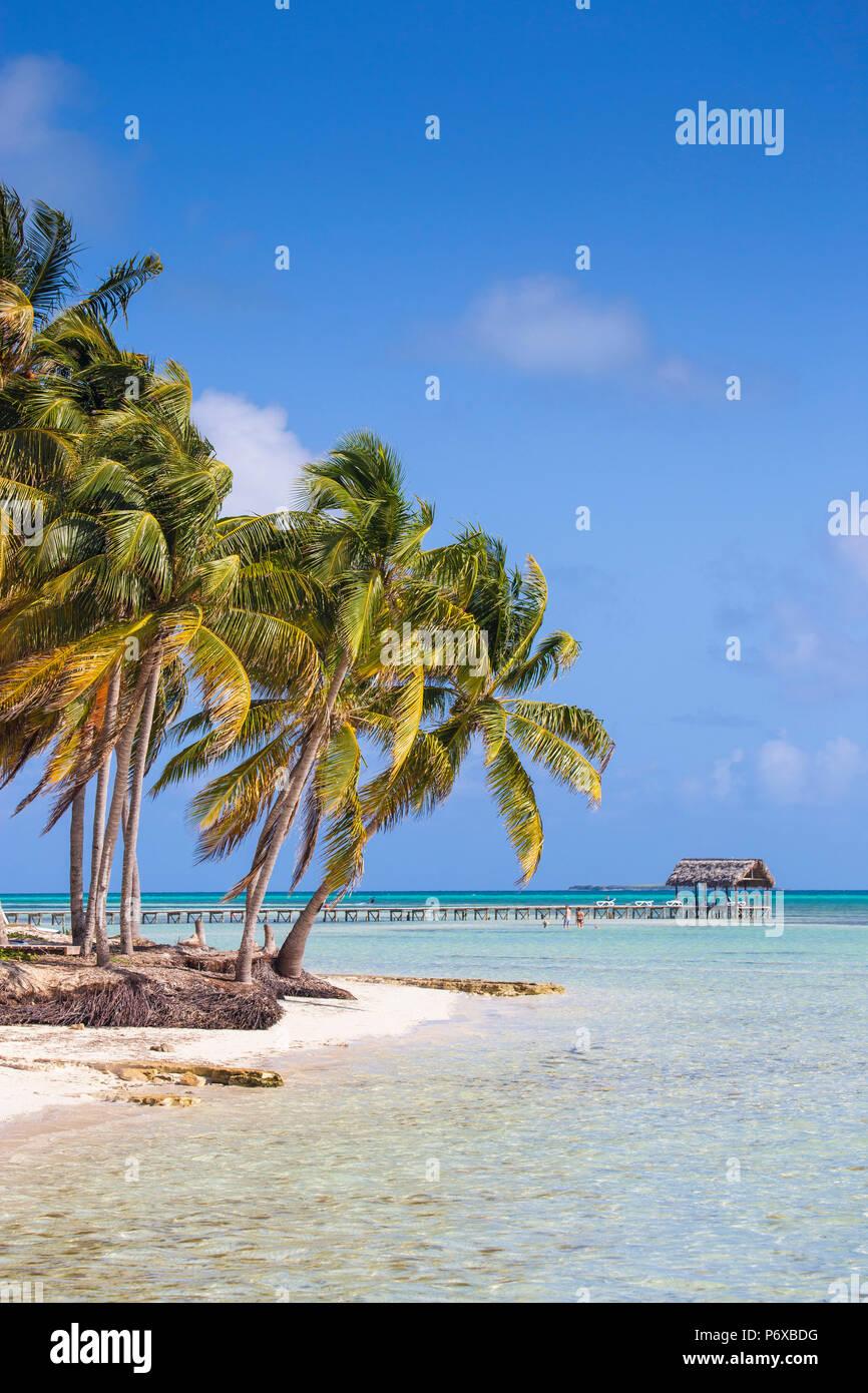 Cuba, Jardines del Rey, Cayo Guillermo, Playa El Paso, las palmeras en la playa de arena blanca Imagen De Stock