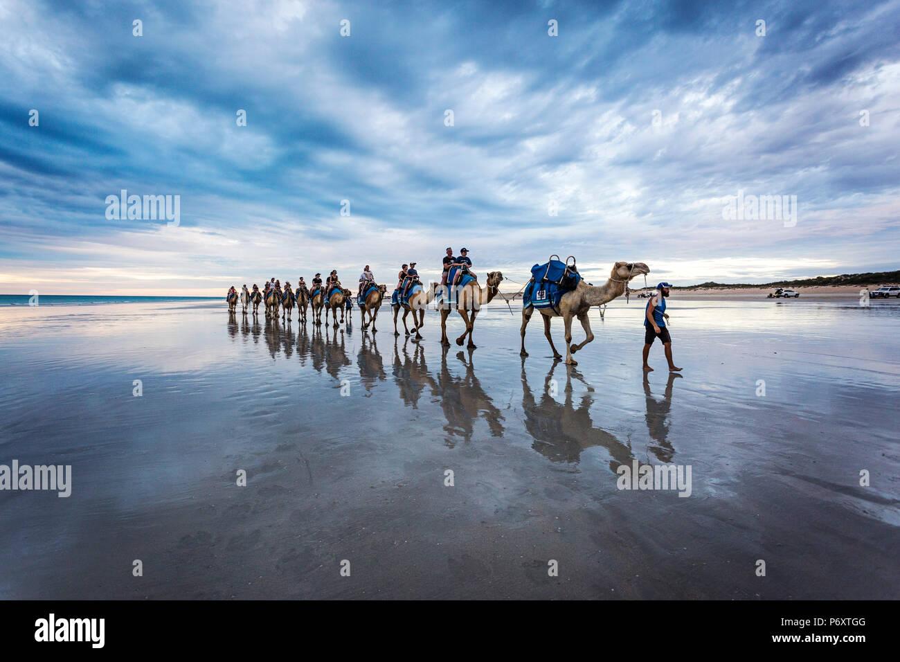 Cable Beach, Australia Occidental. Los camellos en la orilla del mar al atardecer Imagen De Stock