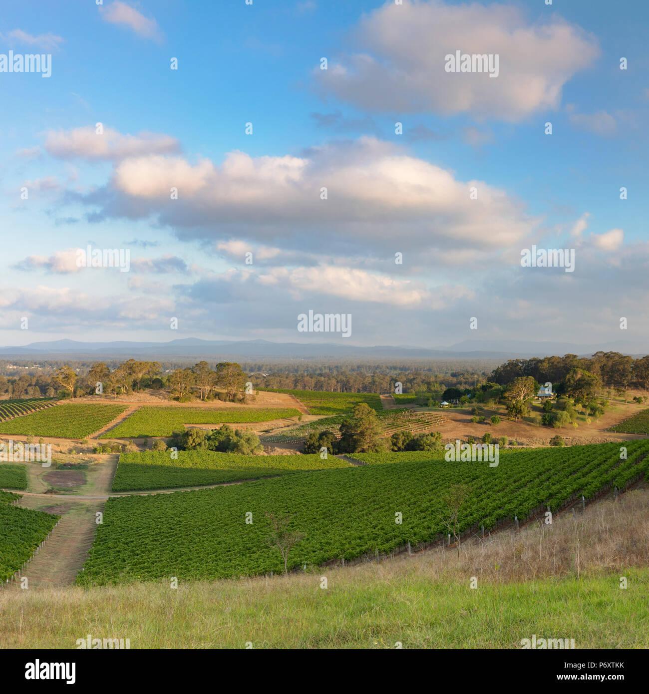 Vista de los viñedos, Hunter Valley, New South Wales, Australia Imagen De Stock