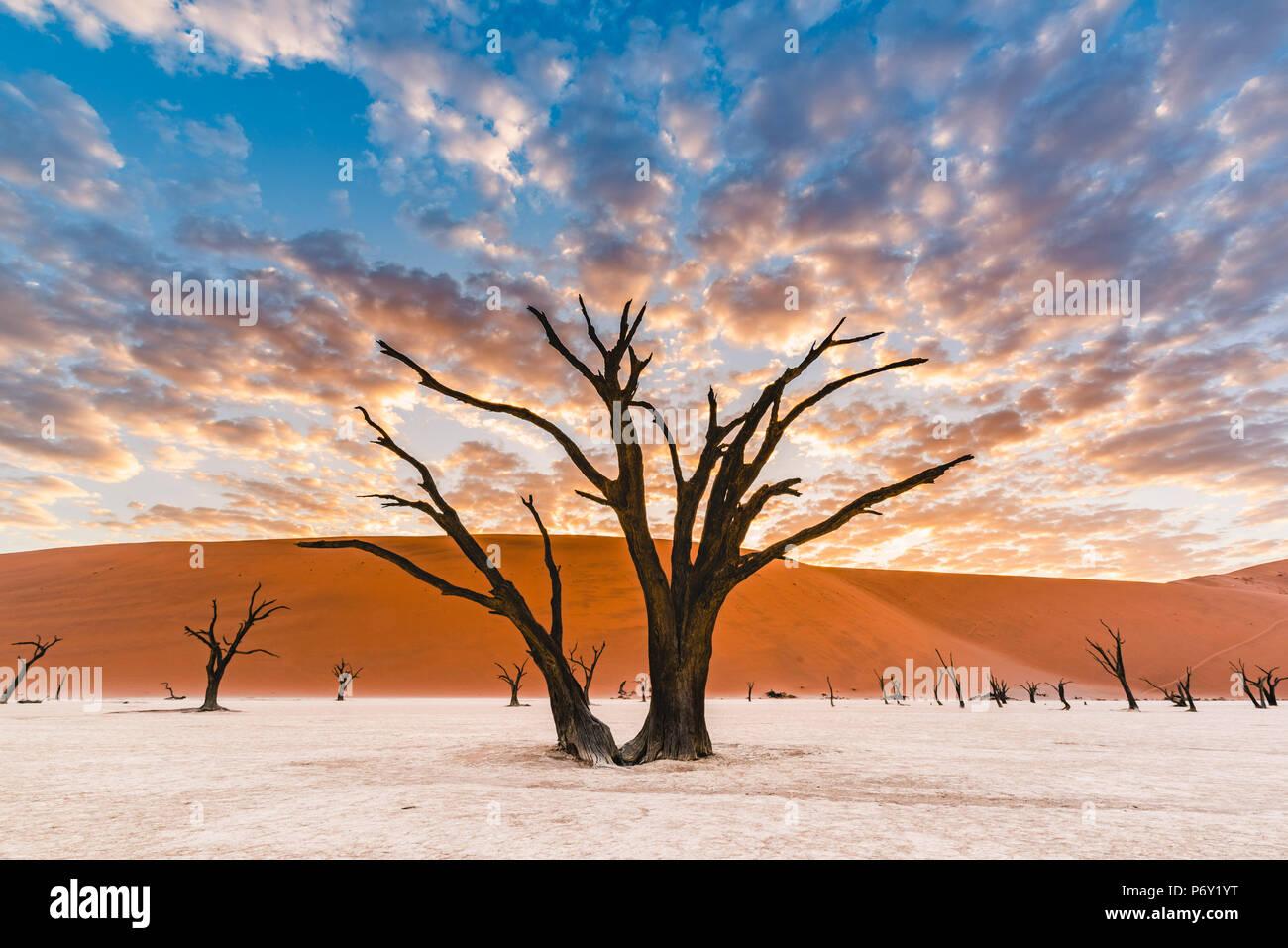 Arcilla Deadvlei pan, Parque Nacional Namib-Naukluft, Namibia, Africa. Muertos árboles de acacia y dunas de arena. Imagen De Stock