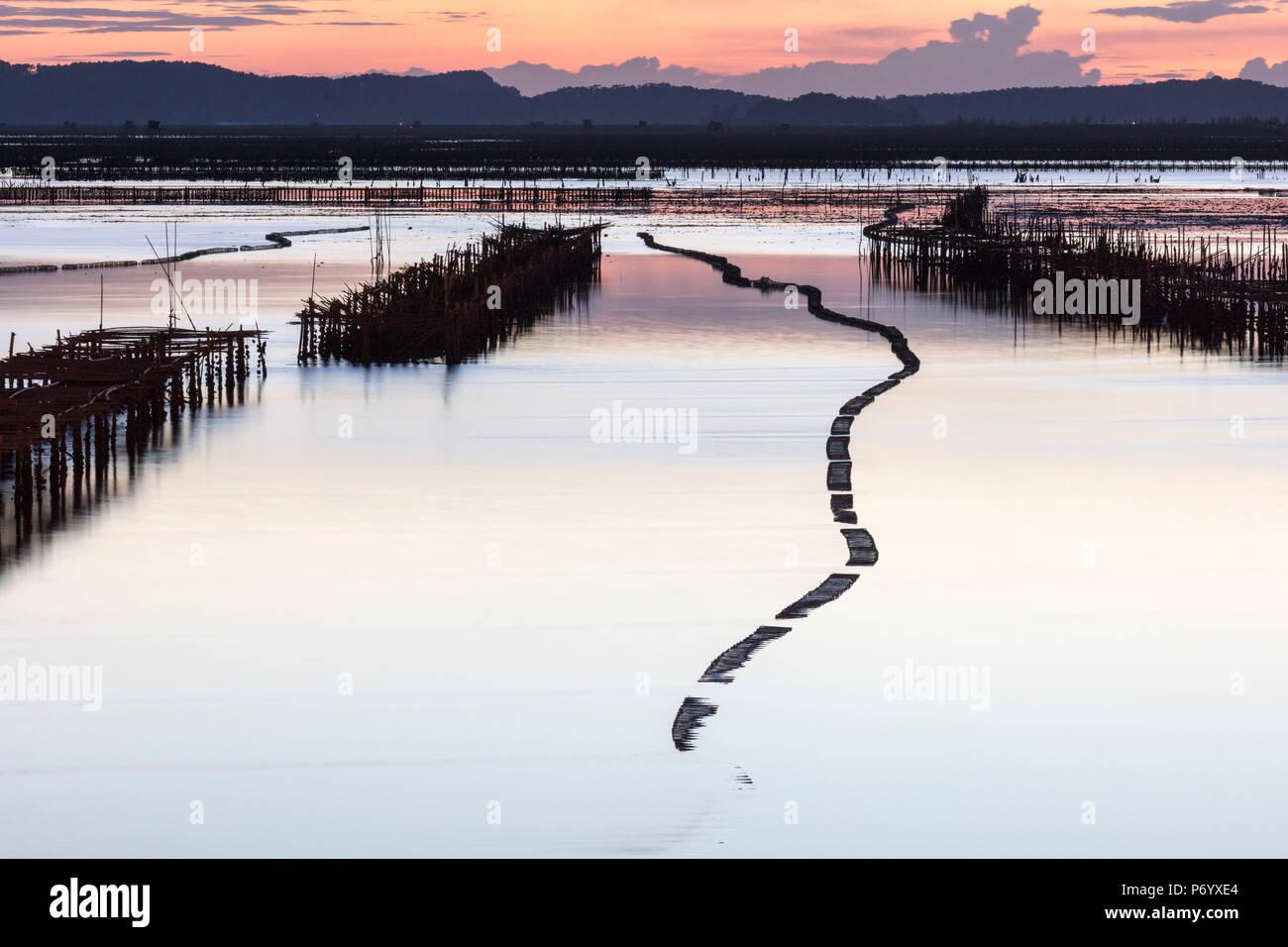Viveros de ostras en la forma de una serpiente al atardecer, la Bahía de Halong, provincia de Quang Ninh, el noreste de Vietnam, Sudeste de Asia Imagen De Stock