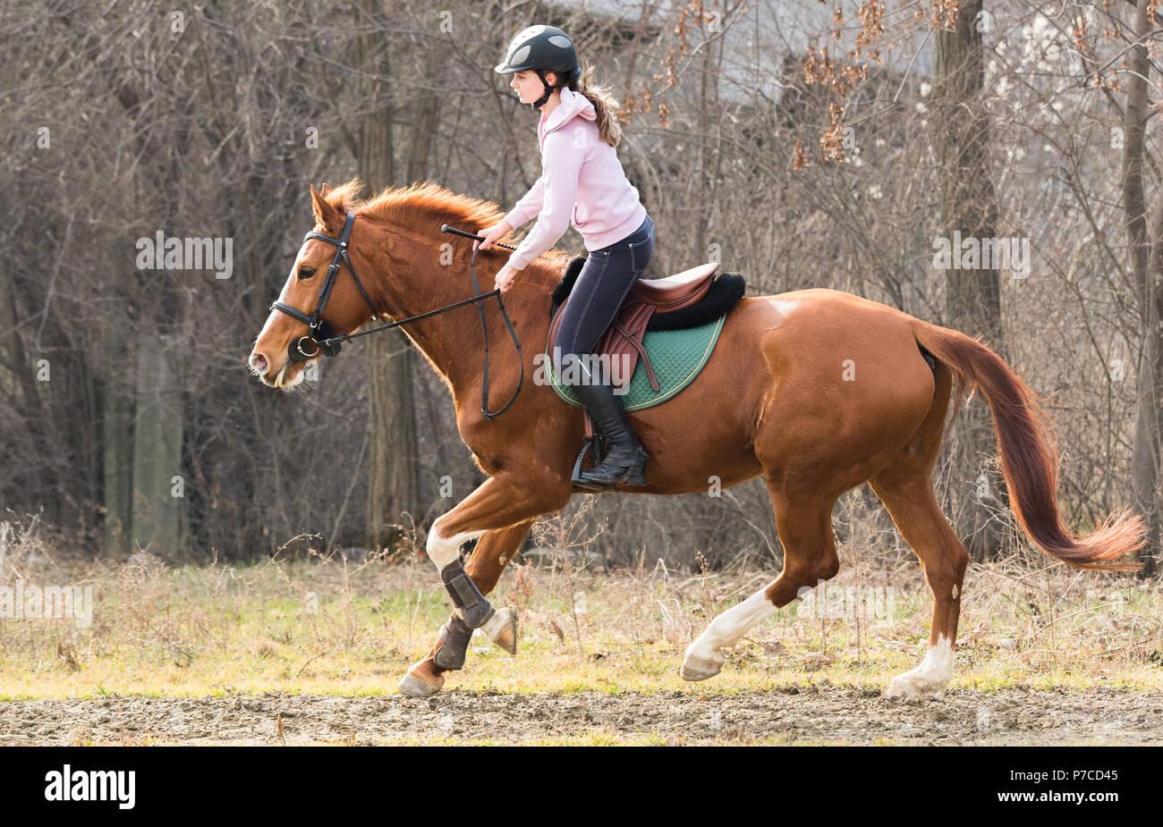 Chica guapa joven a caballo Foto de stock