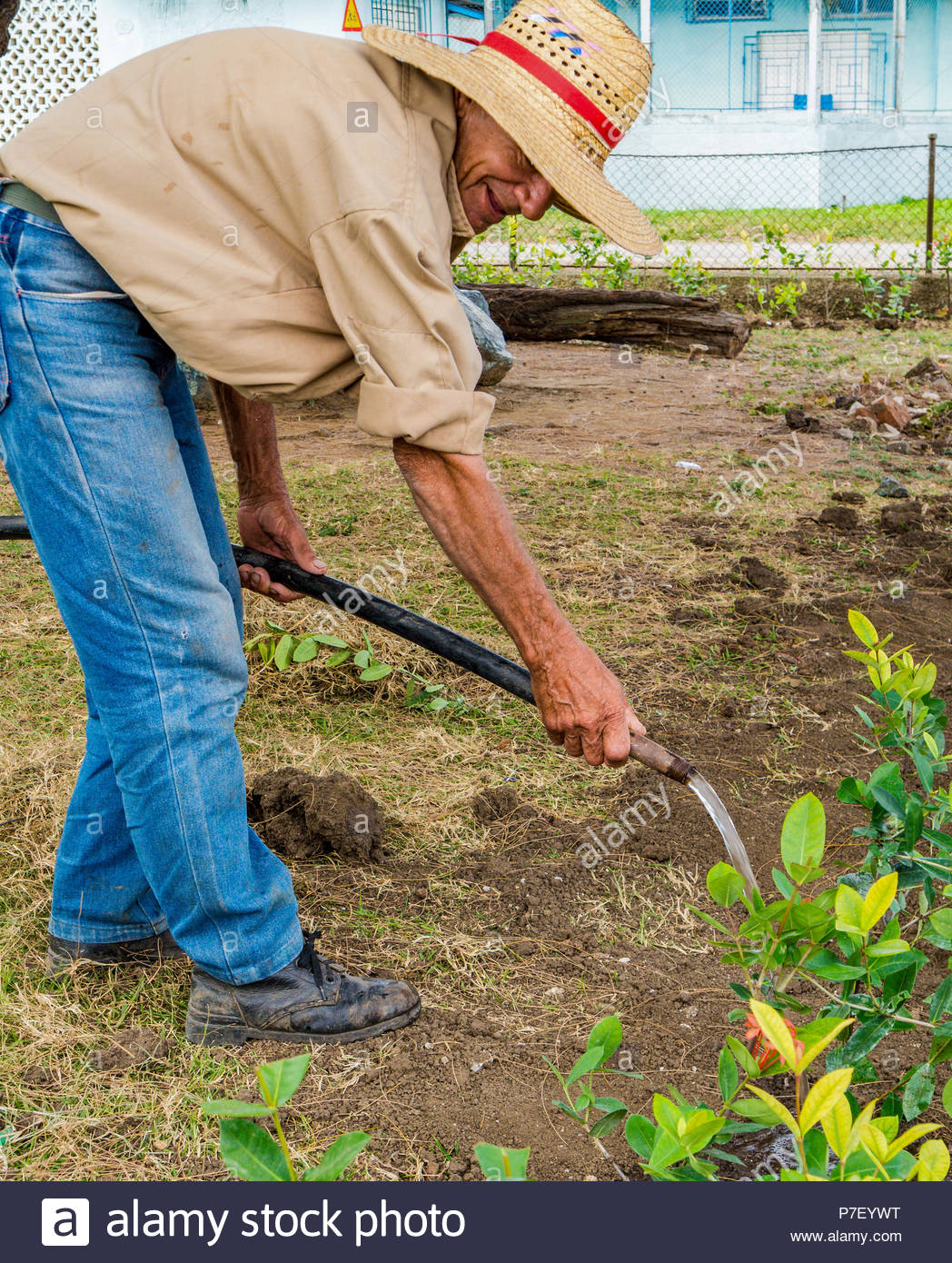 Camagüey, Cuba: regar las plantas jardinero Cubano en un día caluroso y soleado. Hombre que llevaba un sombrero de granjero brown camisa y pantalones de mezclilla. Imagen De Stock