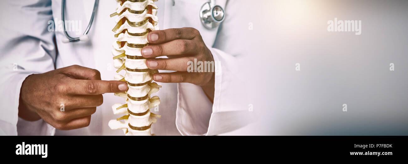 Doctor señalando una columna anatómica Foto de stock