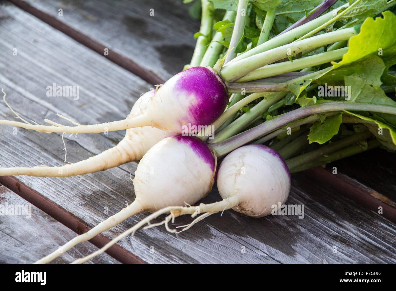 Cosechado pequeño nabo hortalizas frescas orgánicas Imagen De Stock