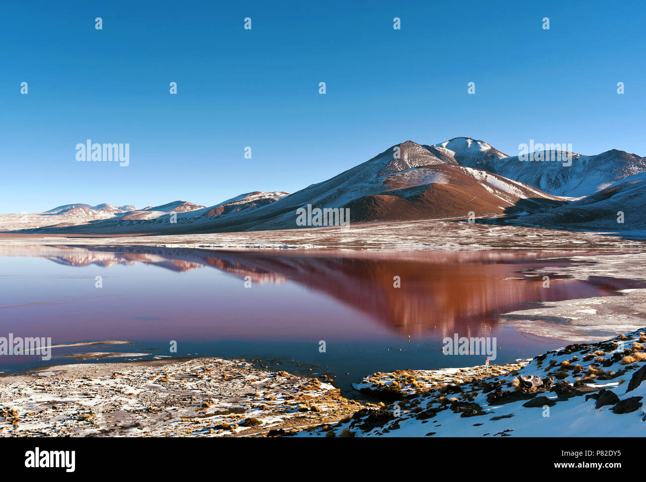 La Laguna Colorada (rojo) La laguna somera Salt Lake en el sudoeste de Bolivia, dentro de Fauna Andina Eduardo Avaroa Reserva Nacional. Imagen De Stock