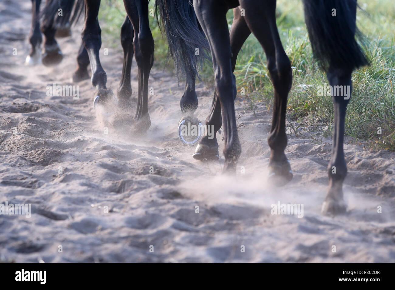 Neuenhagen, Alemania, patas de caballo al trote sobre suelo arenoso Imagen De Stock