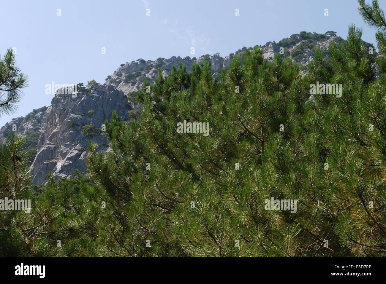 Grandes árboles Frondosos Bajo El Cielo Azul Sobre El Telón De Fondo