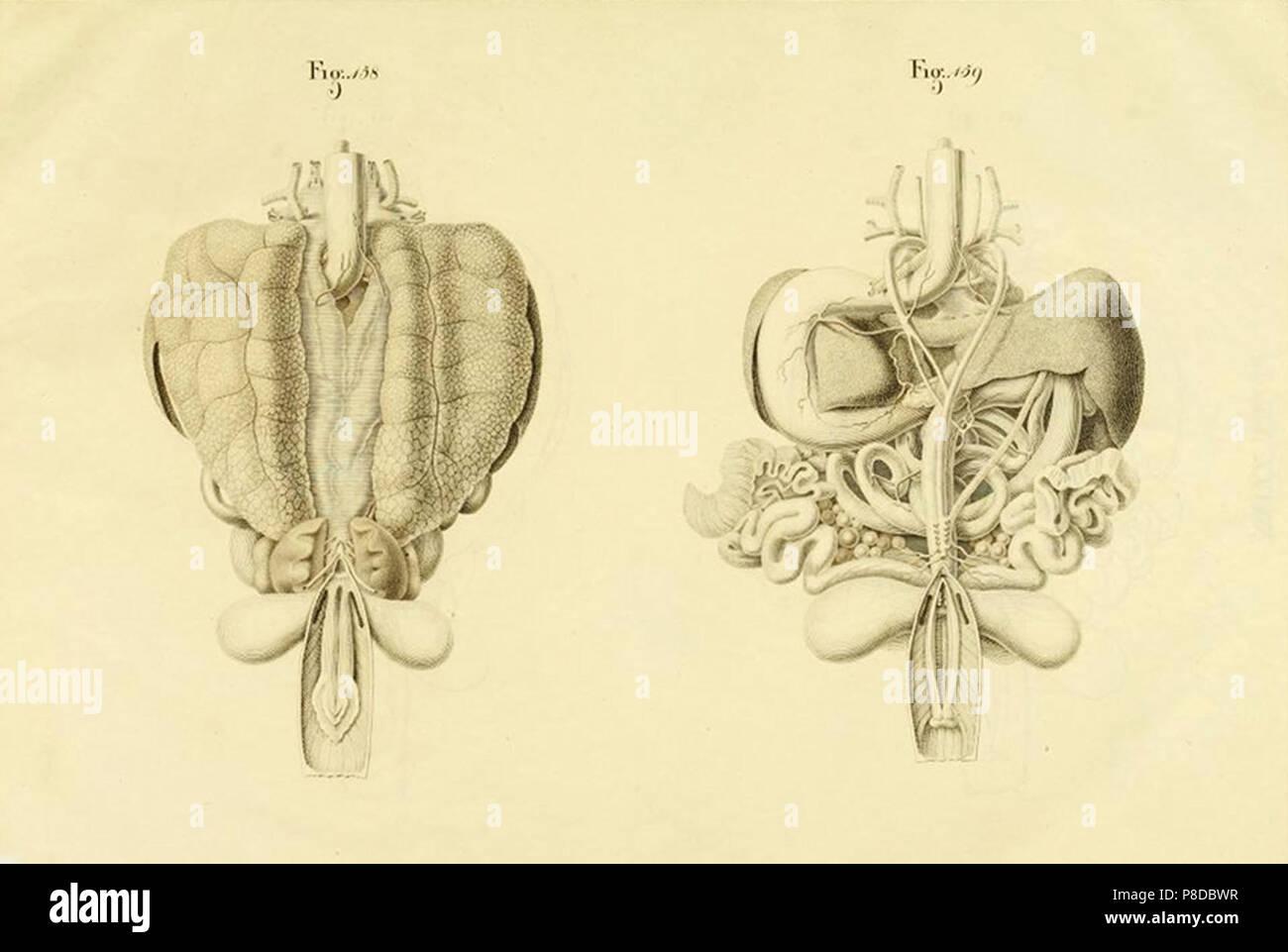 Anatomía de la tortuga Foto & Imagen De Stock: 211736387 - Alamy