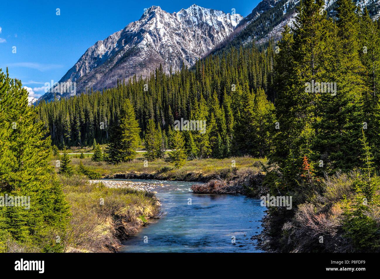 De Flores En La Montana: Su Escena De Montaña Río Flores Hacia La Cámara Y Las