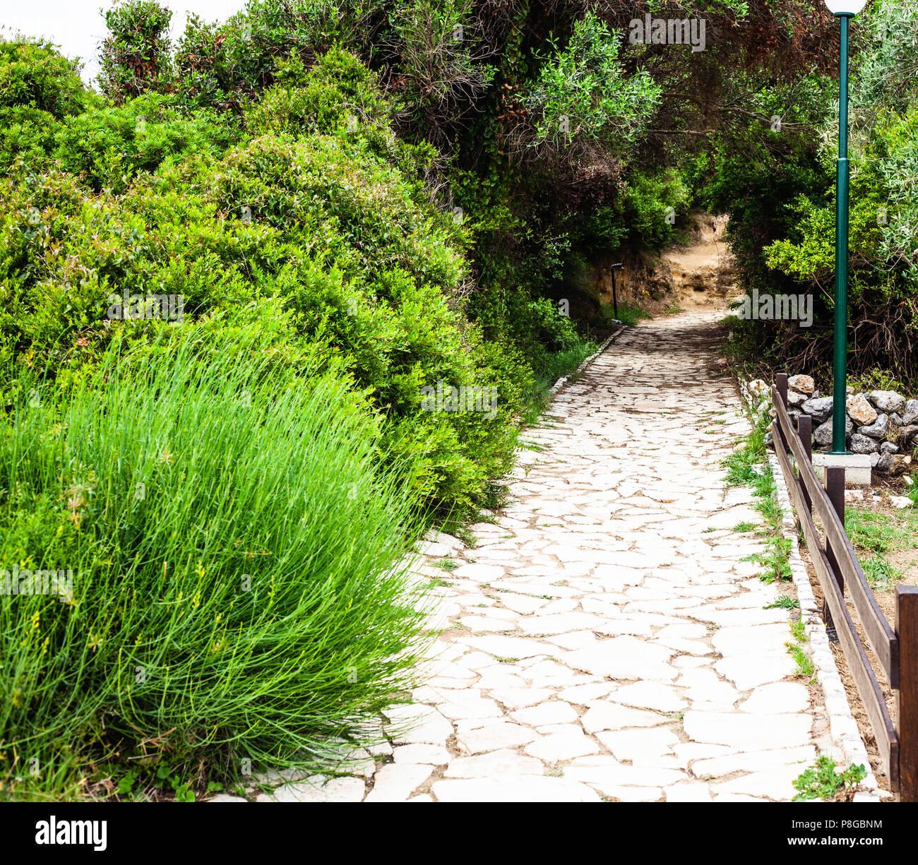 Fantástico camino de piedra con vallas laterales elegante rodeado de maravillosos arbustos verdes bajo una asombrosa brillante cielo azul, sin nubes. Un montón de backwoo Imagen De Stock