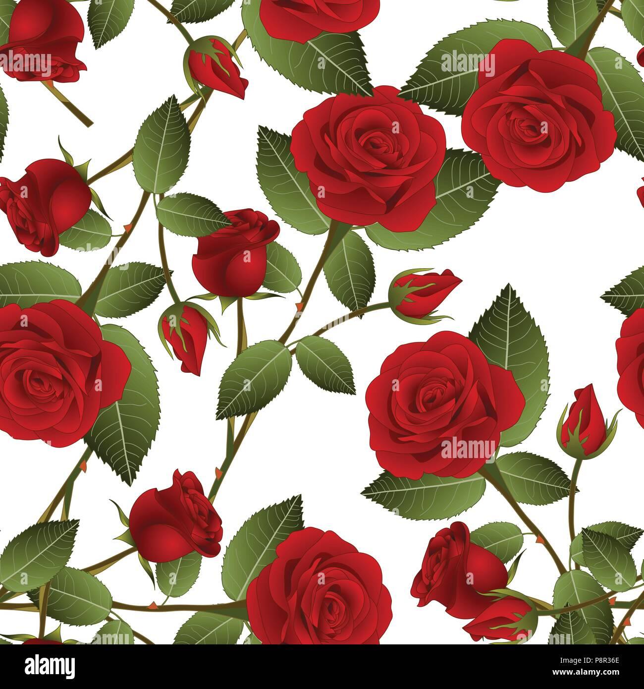 Bonita Rosa Roja Rosa Sobre Fondo Blanco El Día De San Valentín