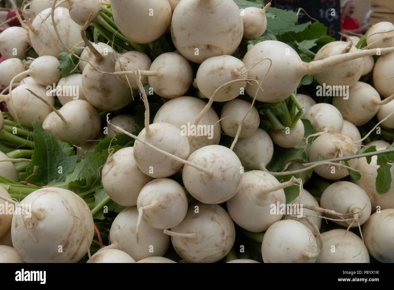 Still life de racimos de nabos orgánicos para la venta en un mercado de granjeros Imagen De Stock