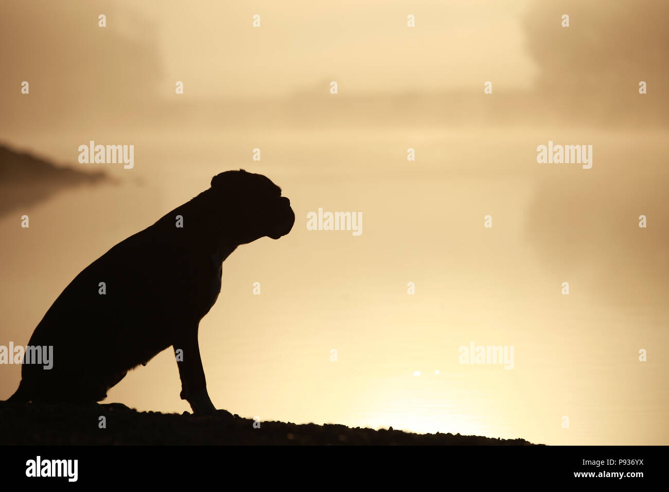Silueta de un perro boxer alemán Foto de stock