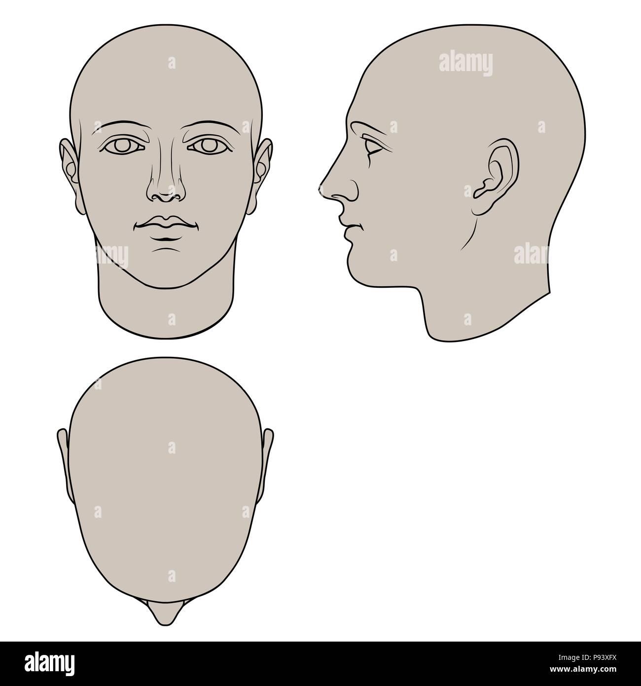 Cabeza humana dibujados a mano en la cara, perfil y vistas superiores. Vector plano aislado sobre fondo blanco. Los dibujos pueden ser utilizados independientemente el uno del otro. Imagen De Stock