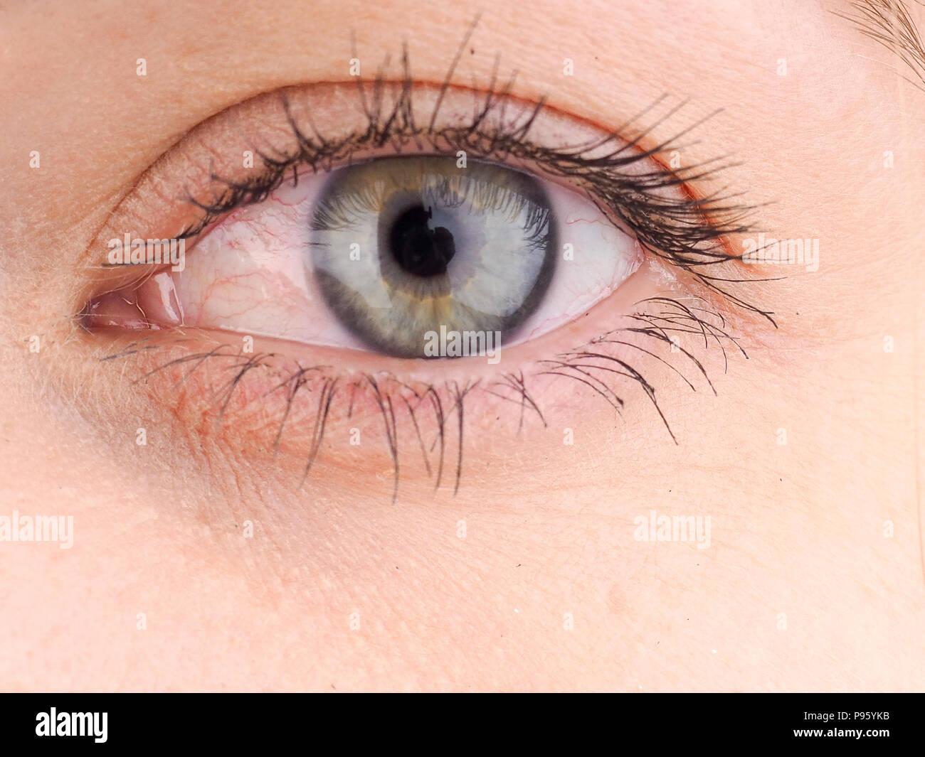 Cerca de los ojos, el ojo humano lateralmente,niña de ojos