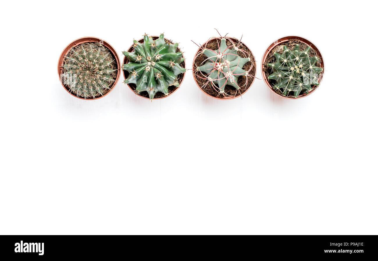 Cuatro macetas con cactus pararse en una fila sobre un fondo de madera blanca Foto de stock