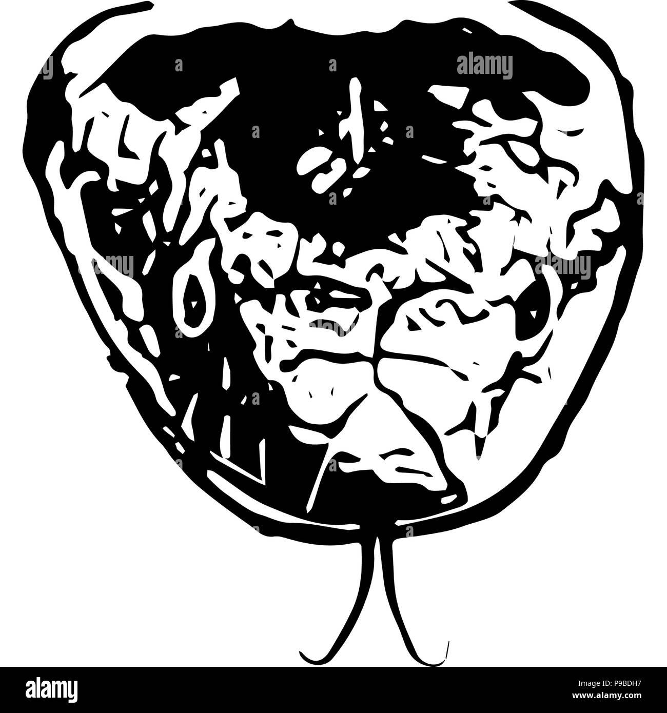 Gráficos vectoriales en blanco y negro de una suave cabeza de serpiente de frente. Imagen De Stock