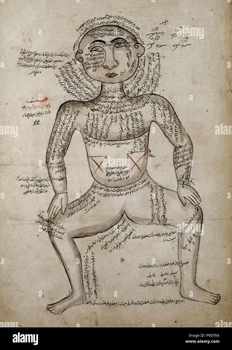 L0006436 músculos del cuerpo humano, acuarela, persa, 19C Crédito ...