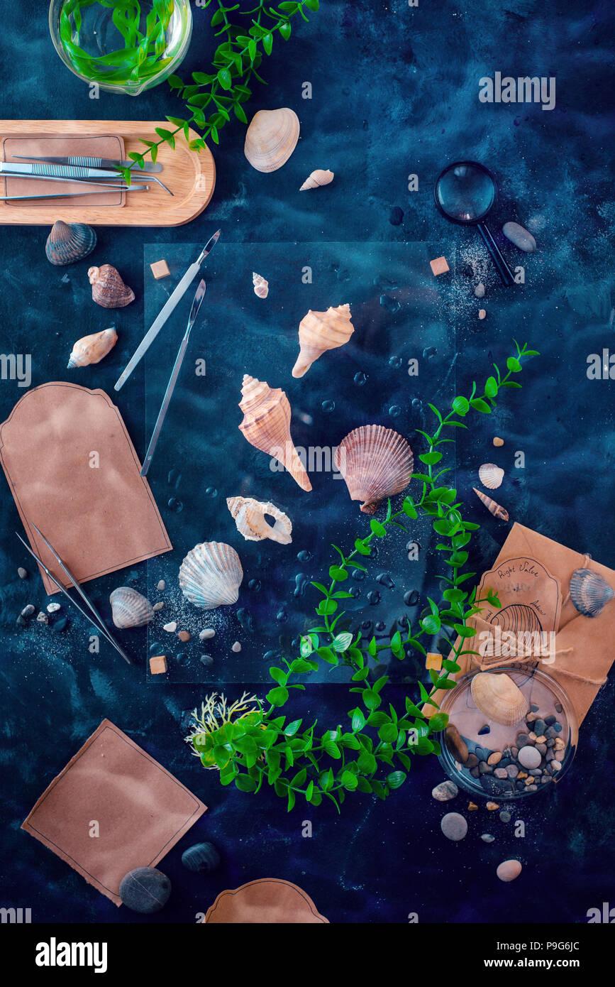 Vida marina y biología marina en el lugar de trabajo científico. Las conchas marinas y las algas en un todavía la vida submarina con agua ripple. Proyecto de ciencia escolar con espacio de copia Imagen De Stock