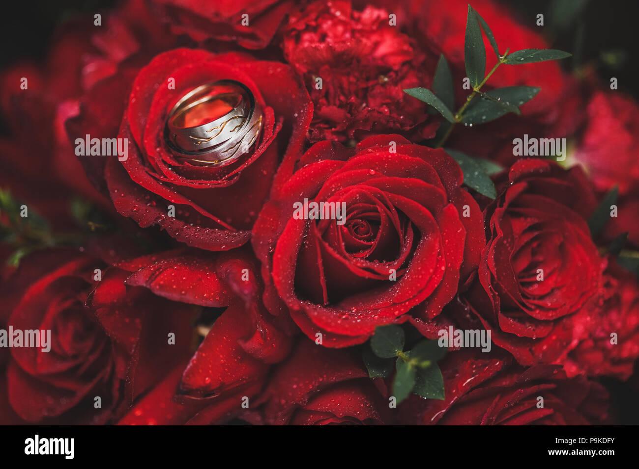 84cbef8c709 Dos anillos de boda de oro sobre fondo de color rojo brillante ramo de rosas  de